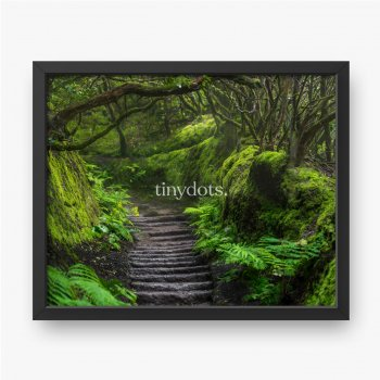 Pfad im Anaga-Regenwald auf der Insel Teneriffa, Spanien