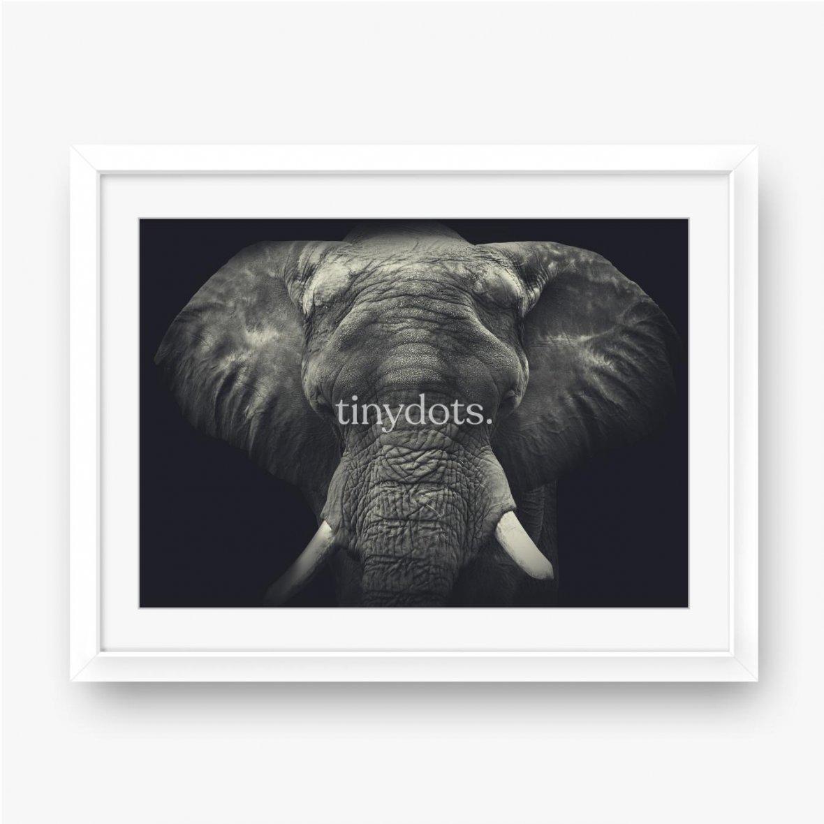Plakat w ramie Słoń z bliska, portret monochromatyczny