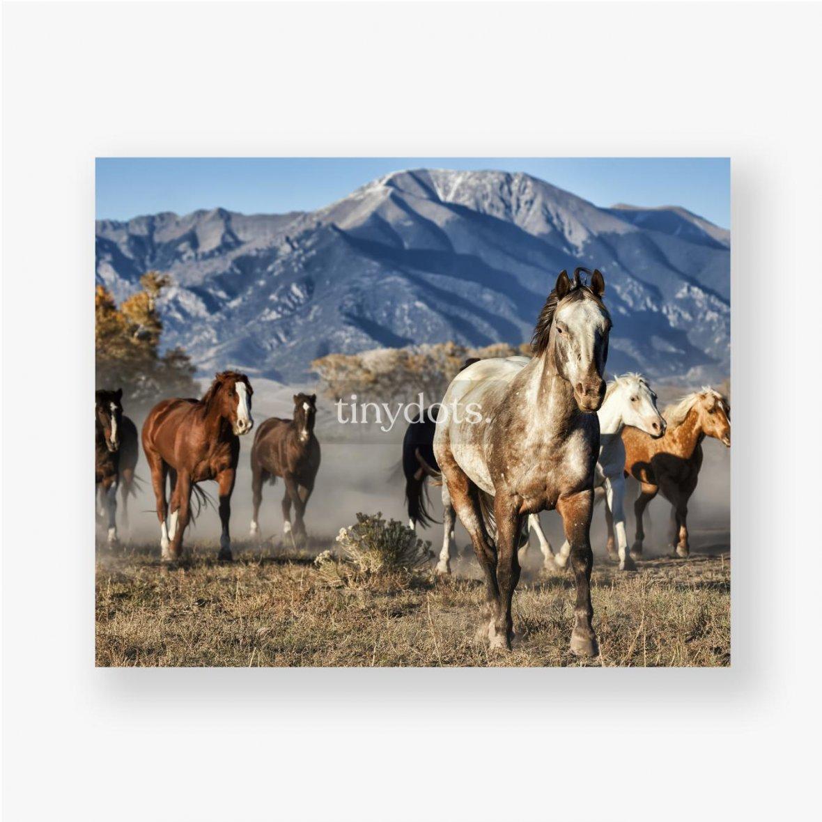Poster Ein Anführer von Laufpferden mit Bergkulisse