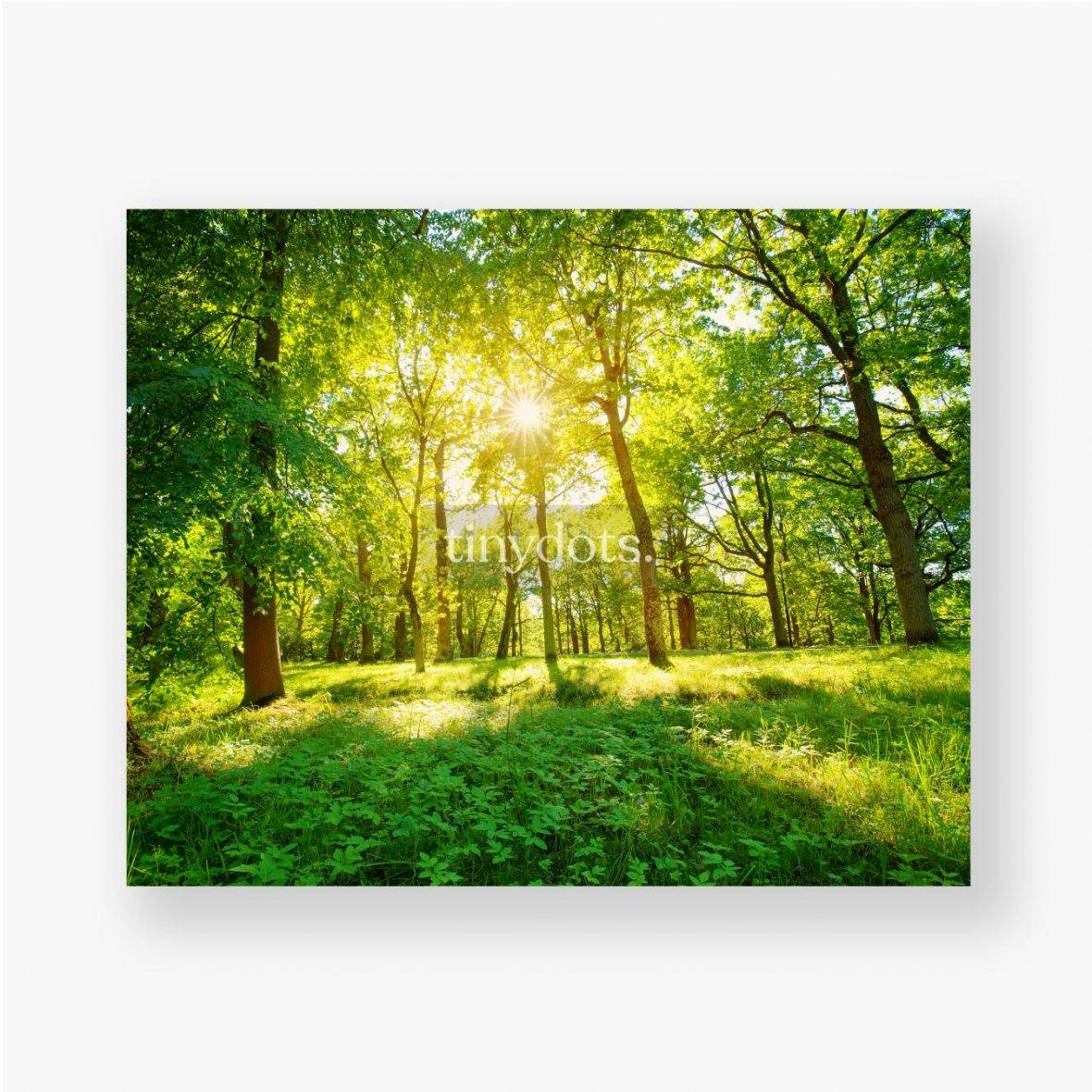 Poster Altes Eichenlaub im Morgenlicht mit Sonnenlicht. Waldlandschaft.