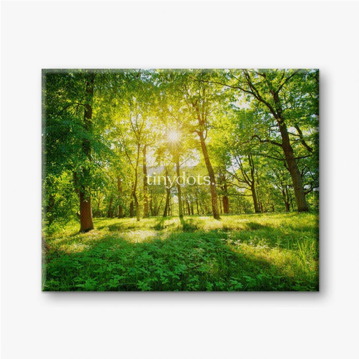 Leinwandbilder Altes Eichenlaub im Morgenlicht mit Sonnenlicht. Waldlandschaft.