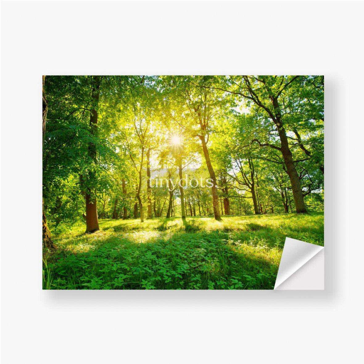 Aufkleber Altes Eichenlaub im Morgenlicht mit Sonnenlicht. Waldlandschaft.