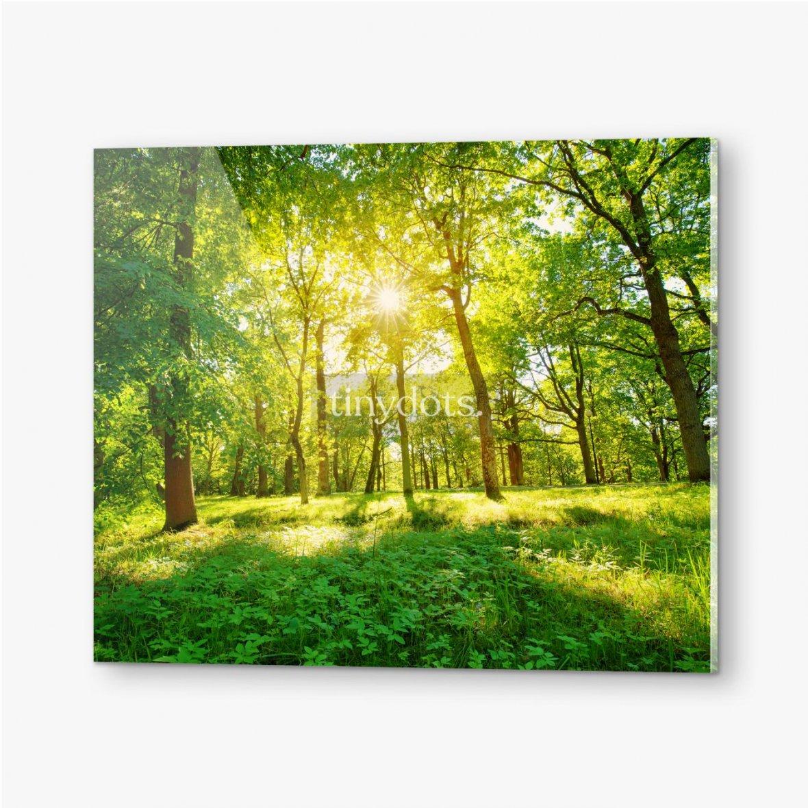 Bilder auf Acrylglas Altes Eichenlaub im Morgenlicht mit Sonnenlicht. Waldlandschaft.