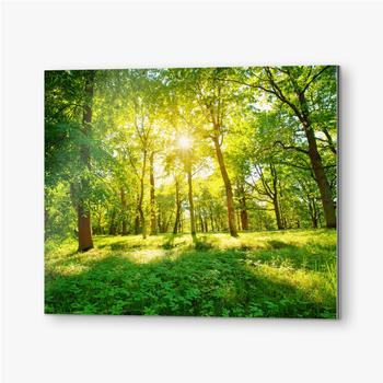Altes Eichenlaub im Morgenlicht mit Sonnenlicht. Waldlandschaft.