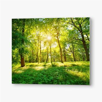 Bilder auf PVC Altes Eichenlaub im Morgenlicht mit Sonnenlicht. Waldlandschaft.