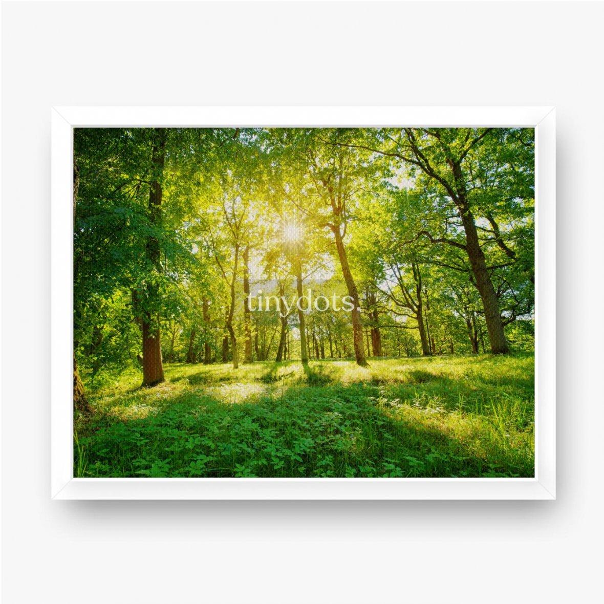 Gerahmte Leinwandbilder Altes Eichenlaub im Morgenlicht mit Sonnenlicht. Waldlandschaft.