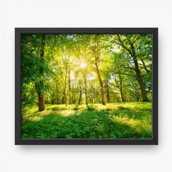 Stary dąb liście w świetle porannym z światłem słonecznym. Krajobraz leśny.