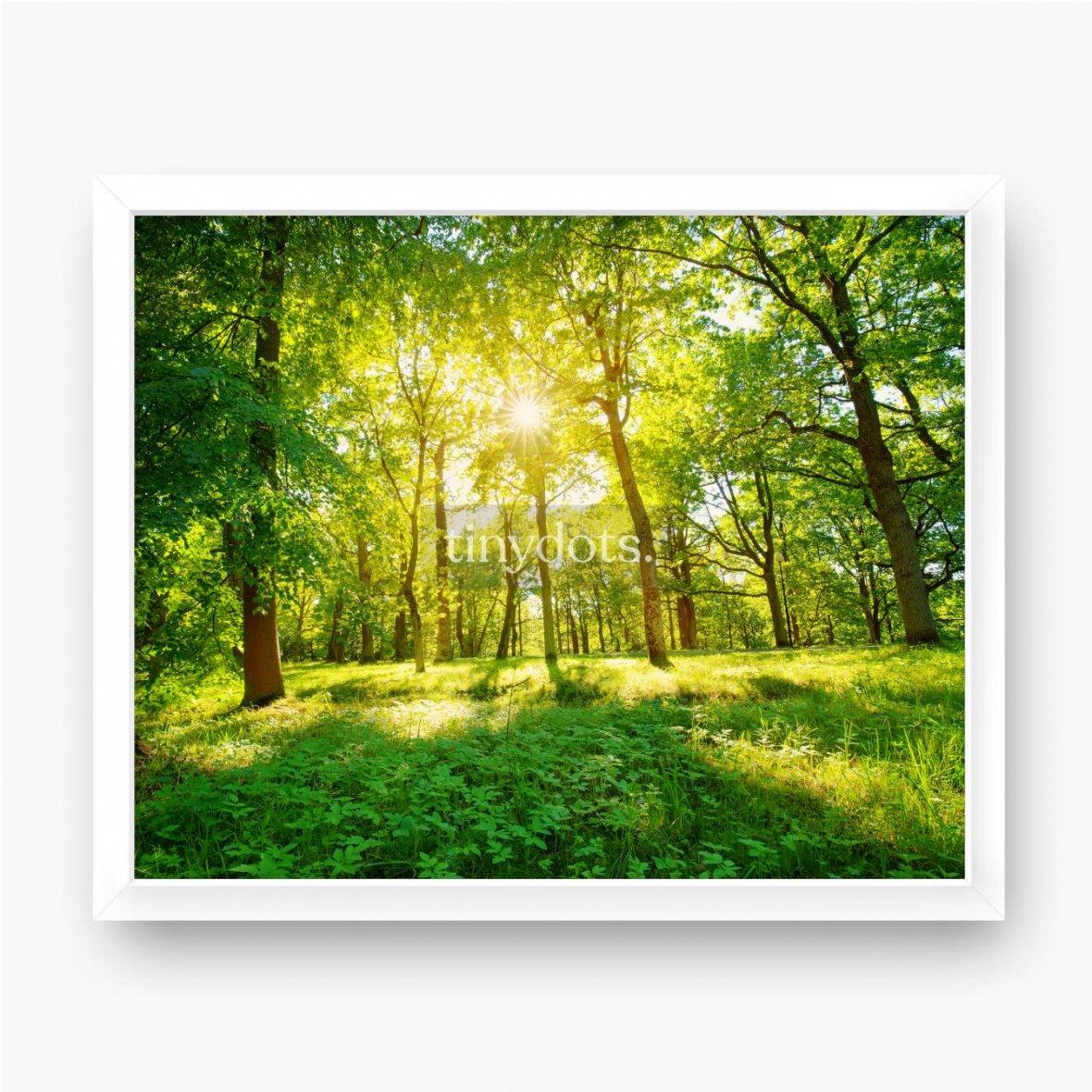 Gerahmte Poster Altes Eichenlaub im Morgenlicht mit Sonnenlicht. Waldlandschaft.