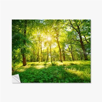 Selbstklebende Poster Altes Eichenlaub im Morgenlicht mit Sonnenlicht. Waldlandschaft.