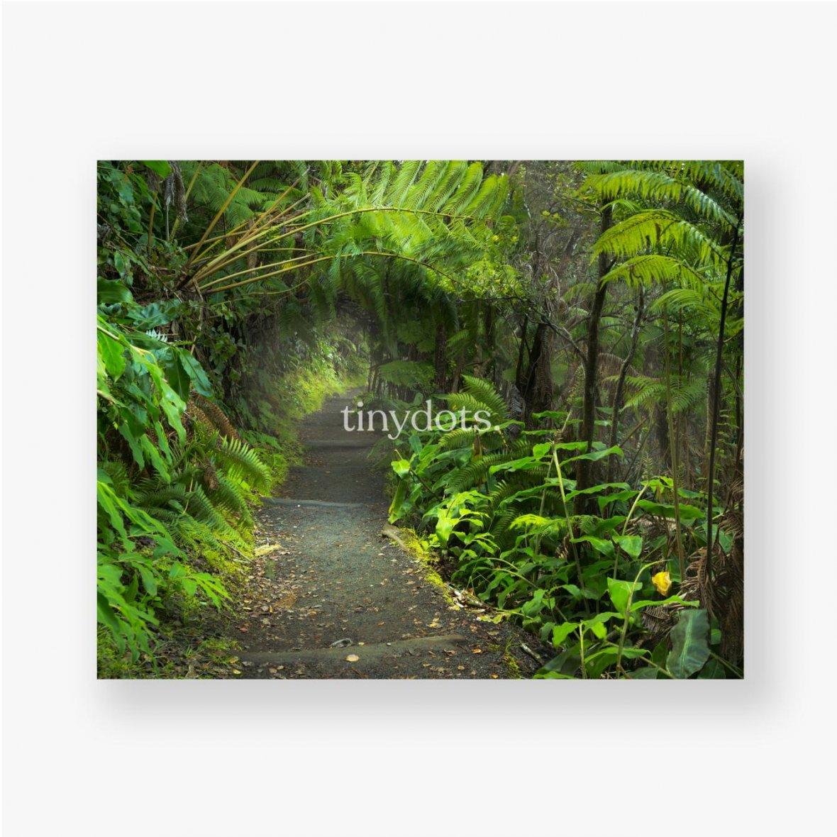 Poster Üppiger Regenwald im Vulkan-Nationalpark Big Island Hawaii, USA