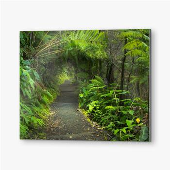 Bilder auf Alu-Dibond Üppiger Regenwald im Vulkan-Nationalpark Big Island Hawaii, USA