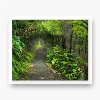 Gerahmte Poster Üppiger Regenwald im Vulkan-Nationalpark Big Island Hawaii, USA