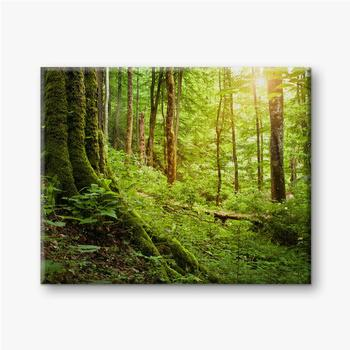 Mit Moos bewachsener Baum, Waldlandschaft