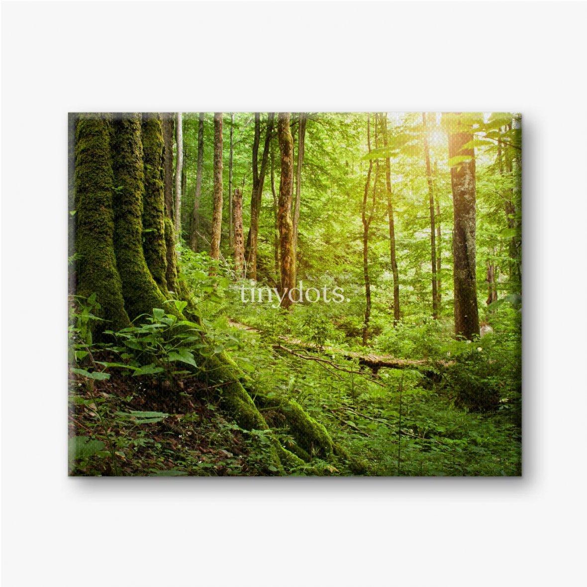 Leinwandbilder Mit Moos bewachsener Baum, Waldlandschaft