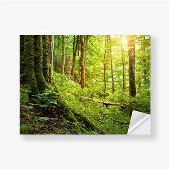 Aufkleber Mit Moos bewachsener Baum, Waldlandschaft