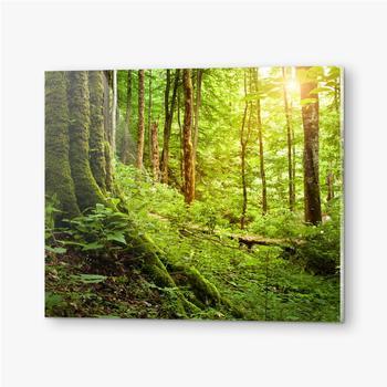 Bilder auf Acrylglas Mit Moos bewachsener Baum, Waldlandschaft