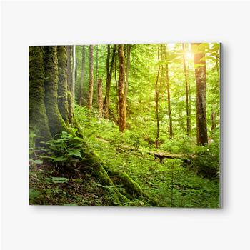 Bilder auf Alu-Dibond Mit Moos bewachsener Baum, Waldlandschaft