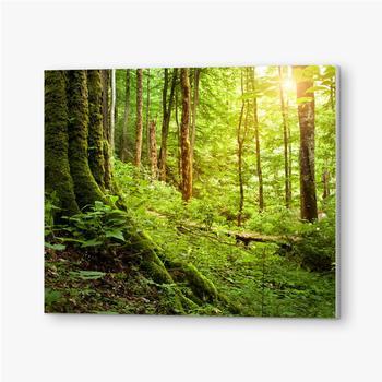 Bilder auf PVC Mit Moos bewachsener Baum, Waldlandschaft