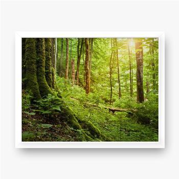 Gerahmte Leinwandbilder Mit Moos bewachsener Baum, Waldlandschaft