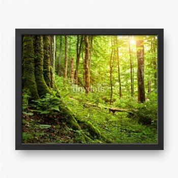 Drzewo porośnięte mchem, krajobraz leśny