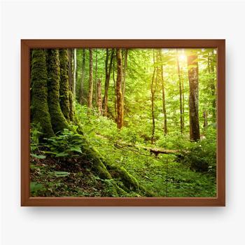 Gerahmte Poster Mit Moos bewachsener Baum, Waldlandschaft