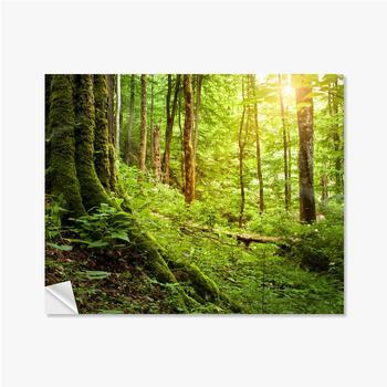 Selbstklebende Poster Mit Moos bewachsener Baum, Waldlandschaft