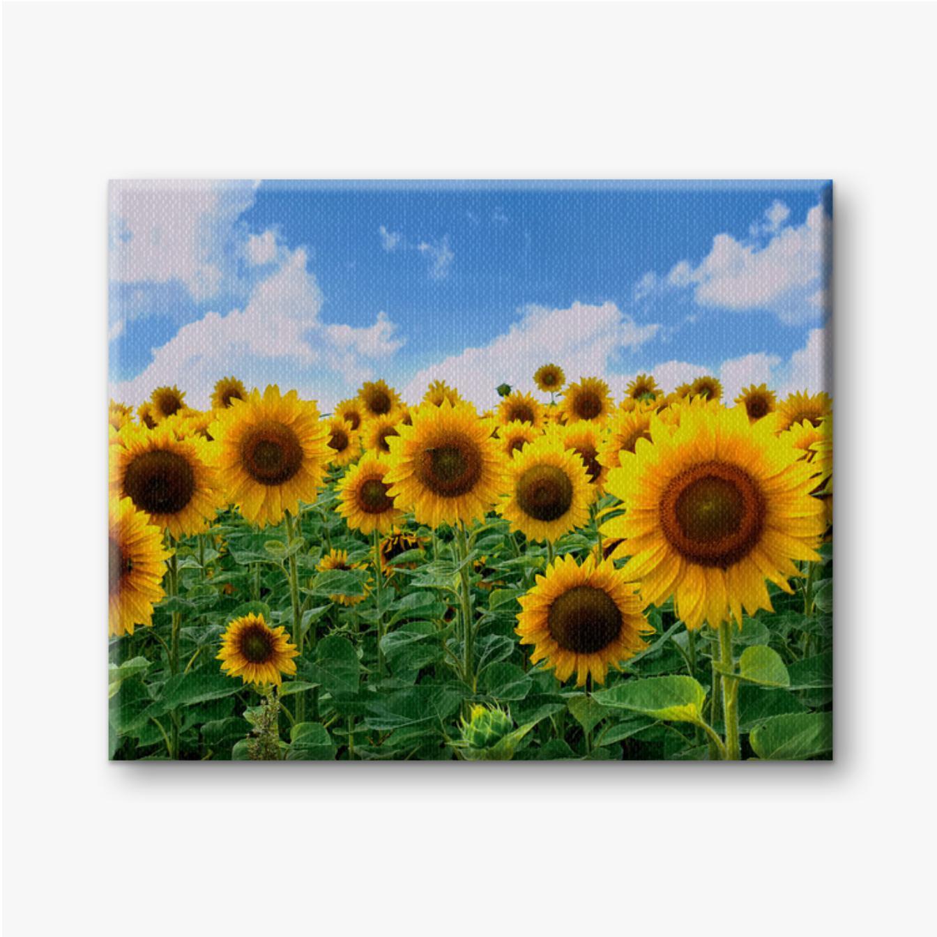 Feld mit leuchtend gelben Sonnenblumen mit grünen Blättern auf blauem Himmel