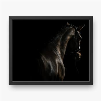 Elegantes Sportpferd.