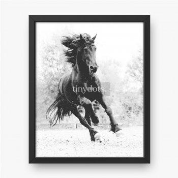 Koń fryzyjski czarny i biały.