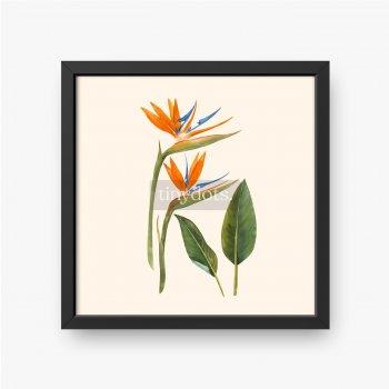 Aquarell strelitzia Blumenvektorillustration.