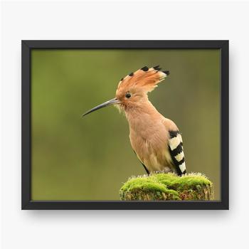 Schöner Vogel auf einem grünen Hintergrund.