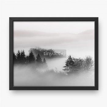 Piękne ujęcie lasu we mgle z pochmurnym tłem czarno-białe.
