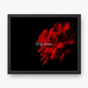 Rote Plumeria-Blume auf schwarzem Hintergrund.