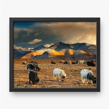 Weidende Schafe und Ziegen.