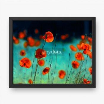 Blühende rote Mohnblumen in einem Feld im Frühjahr in der Natur auf einem türkisfarbenen Hintergrund mit Weichzeichner, Makro.