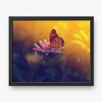 Schmetterling auf einer Blume bei Sonnenuntergang.