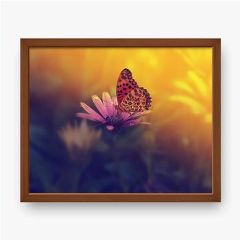 Schmetterling auf einer...