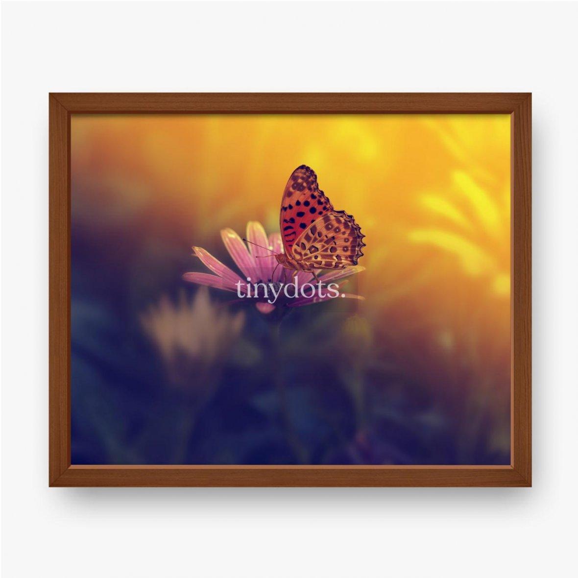 Gerahmtes Poster Schmetterling auf einer Blume bei Sonnenuntergang.