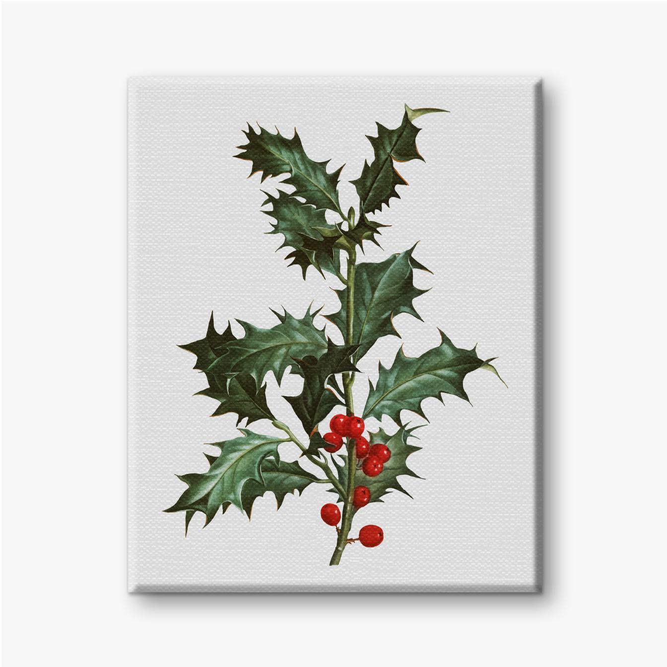 Stechpalmenzweig mit grünen Blättern und roten Früchten