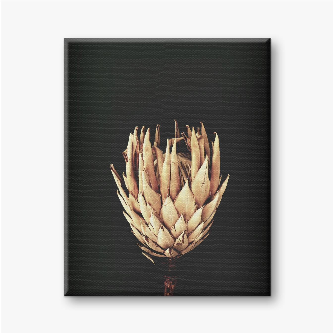 Getrocknete exotische Blumen Protea auf schwarzem Hintergrund