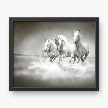 Herde weißer Pferde, die durch Wasser laufen.