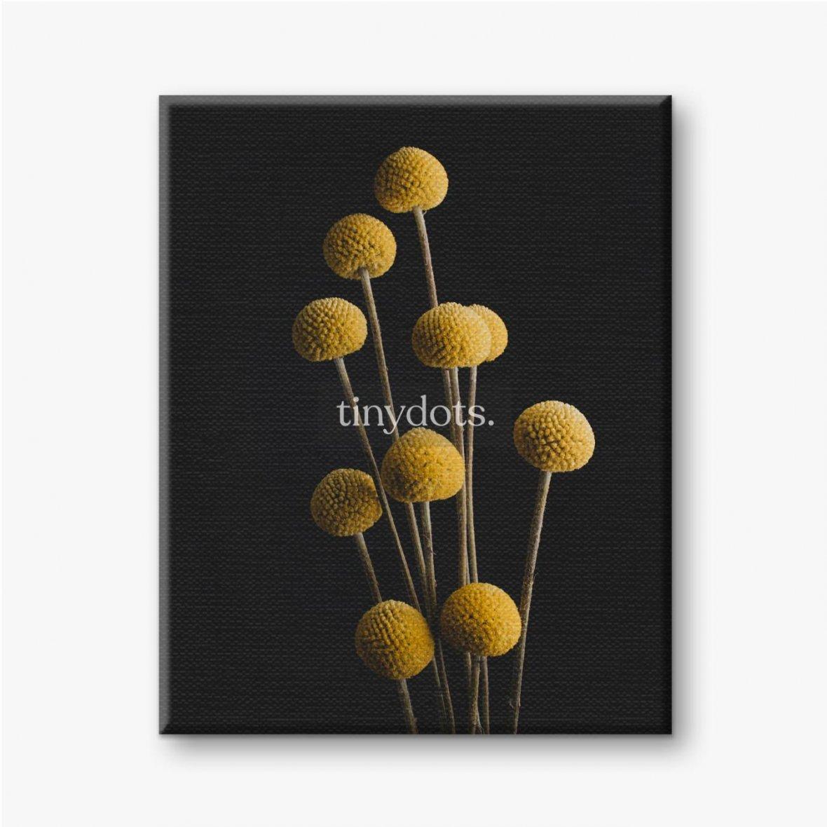 Leinwandbild Blumen von Craspedia auf schwarzem Hintergrund