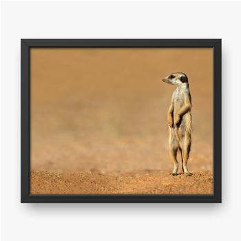 Erdmännchen auf der Hut, Kalahari-Wüste.