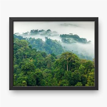 Poranna mgła w dżungli.