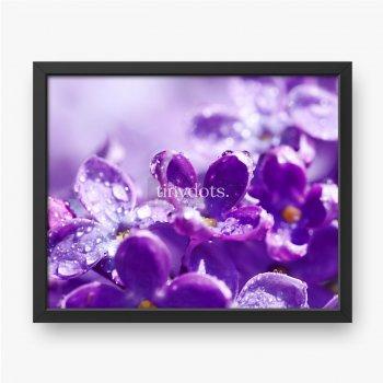 Blüten einer lila Blüte im Frühjahr.