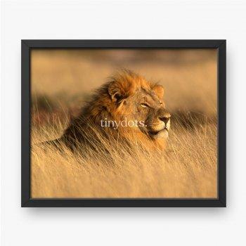 Ein großer Löwe im hohen Gras.