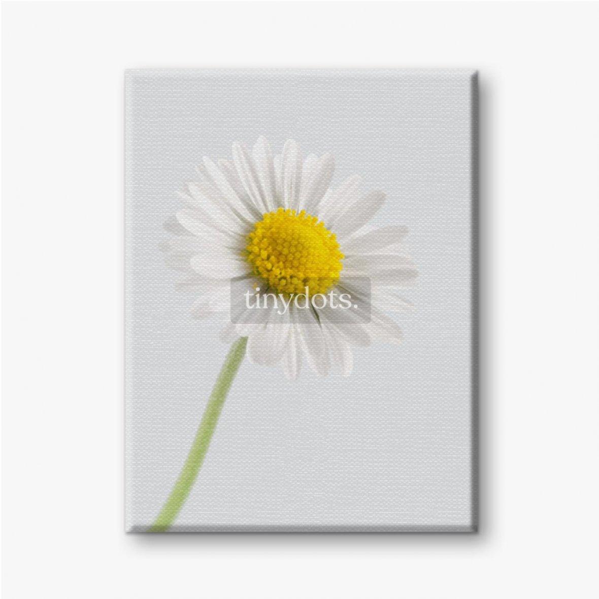 Leinwandbild Gänseblümchenblume auf einem hellen Hintergrund