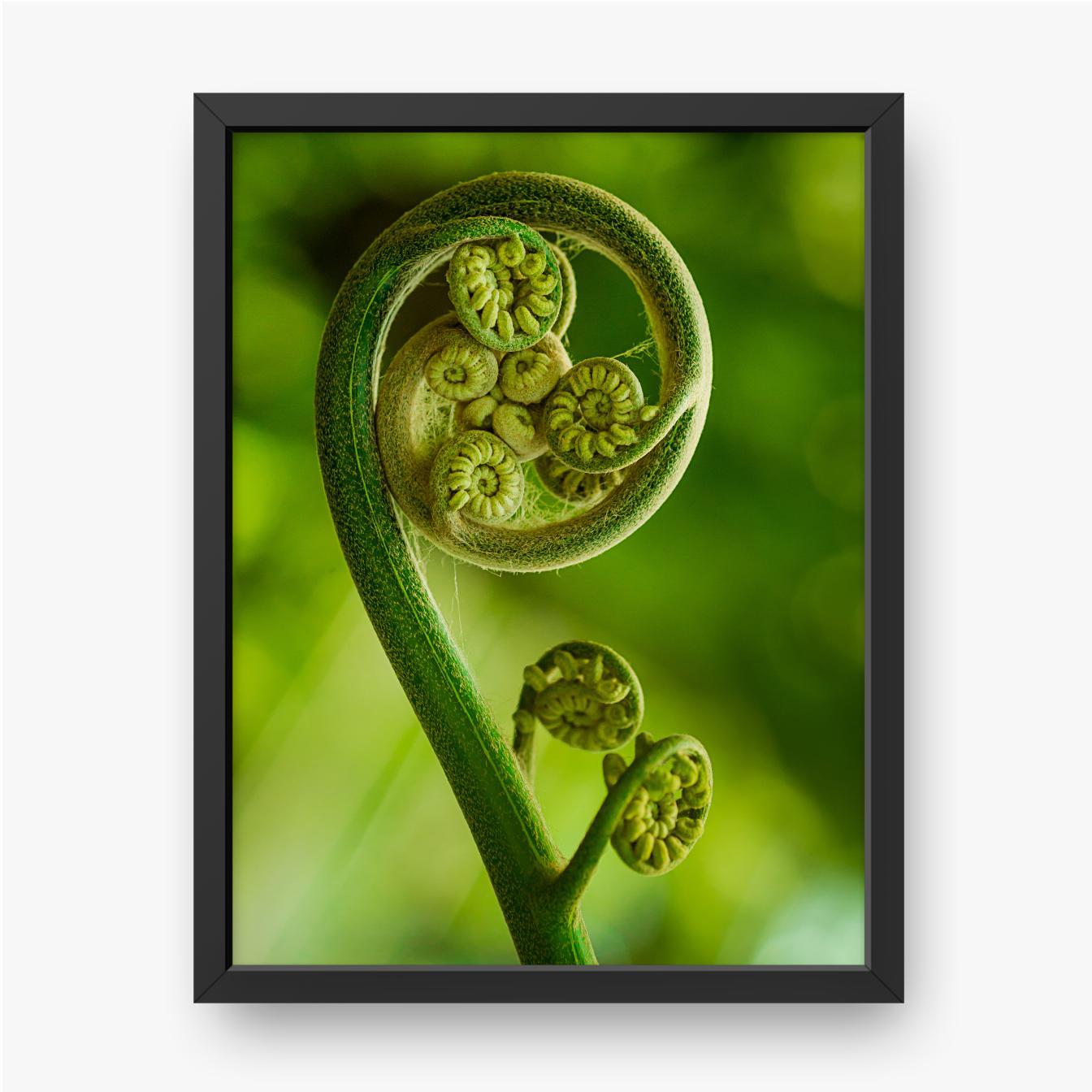 Zielony liść paproci w lesie z bliska