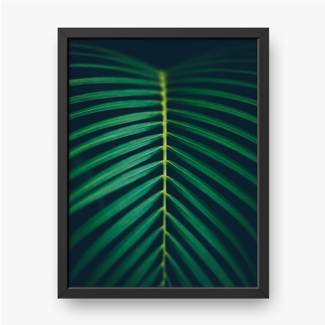 Liść palmy z bliska