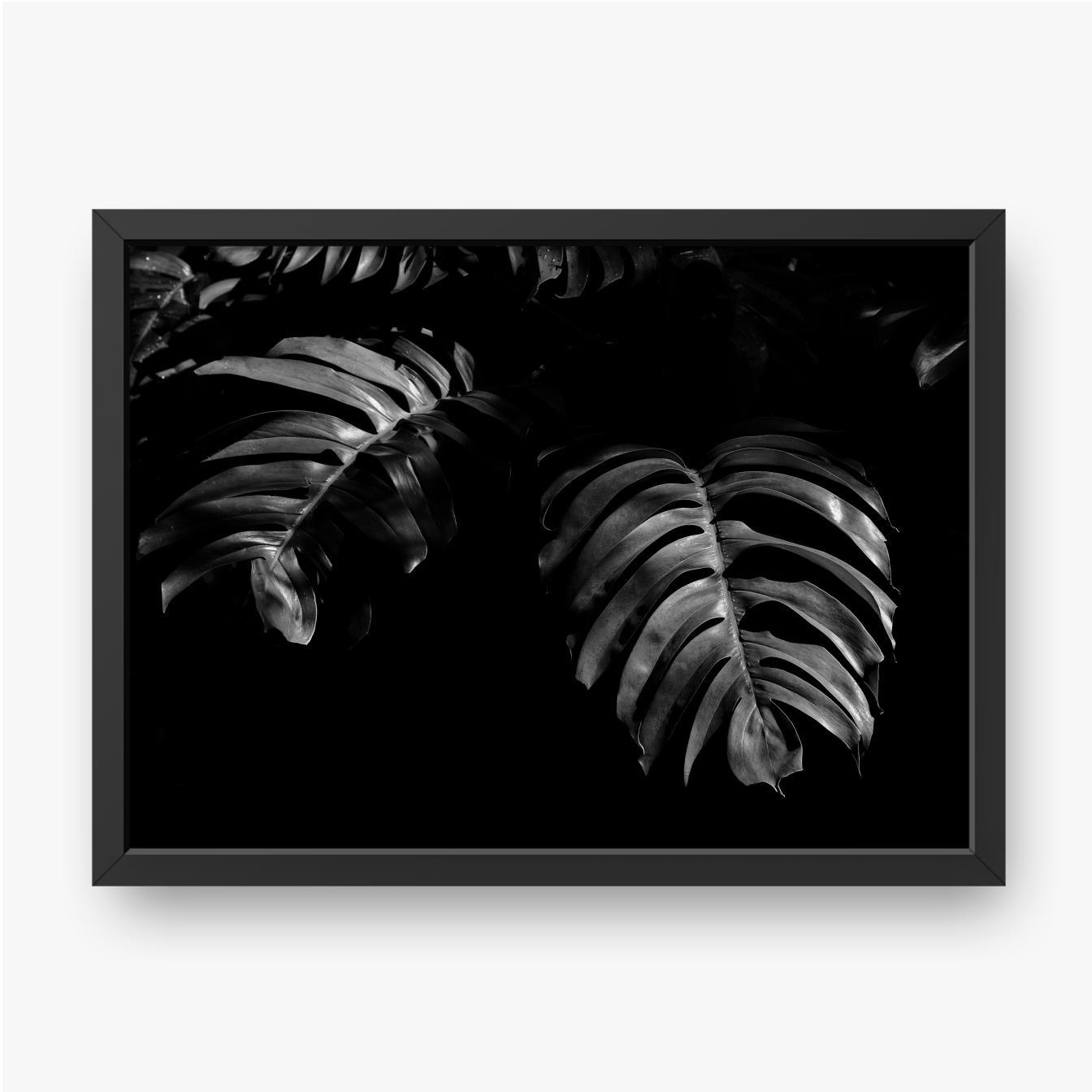 Liść w lesie deszczowym, w czerni i bieli
